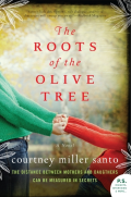 Roots of olive